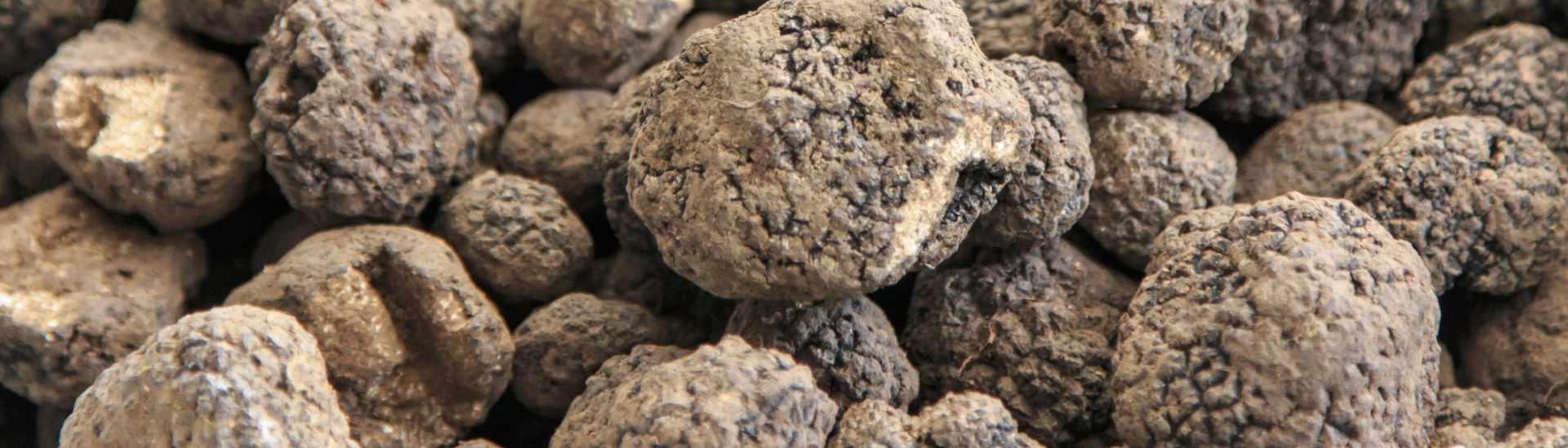 Cultivating Truffles